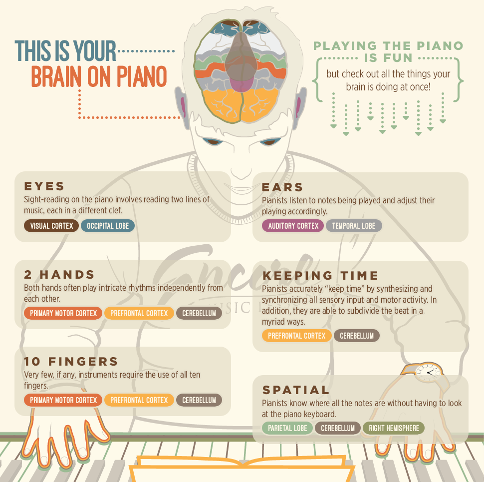 infographic on how piano lessons are good for your brain